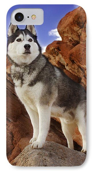 IPhone Case featuring the photograph King Of The Huskies by Brian Cross