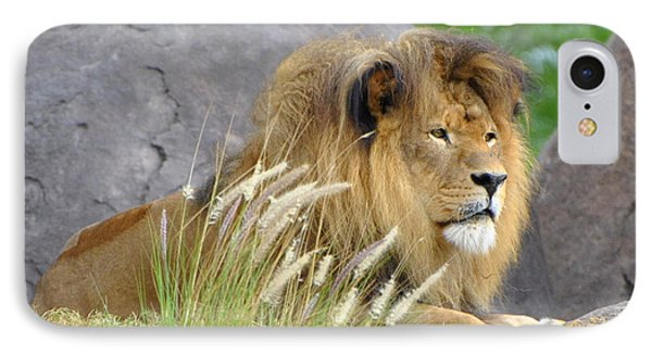 King Of The Jungle IPhone Case by Jodi Terracina