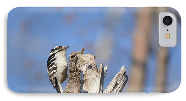 IPhone Case featuring the photograph King Of The Tree Top by Dacia Doroff