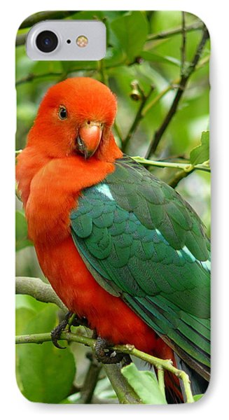 IPhone Case featuring the photograph King Parrot Male by Margaret Stockdale