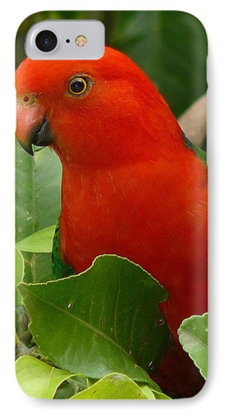 IPhone Case featuring the photograph King Parrot Portrait by Margaret Stockdale
