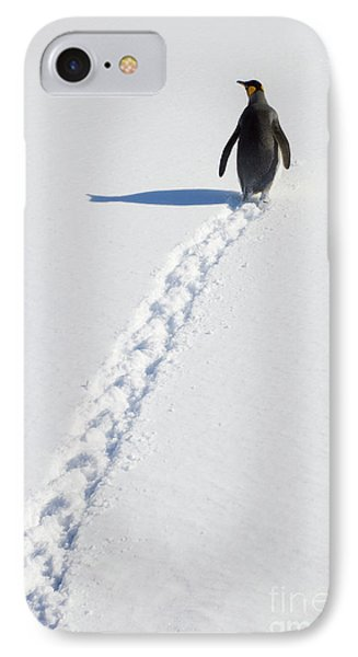 King Penguin And Tracks S Georgia Island IPhone Case by Yva Momatiuk and John Eastcott