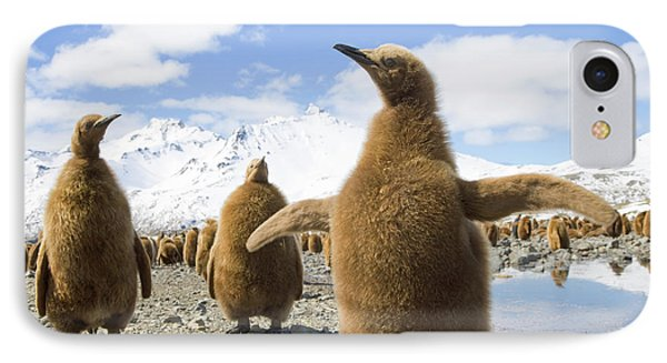 King Penguin Chicks South Georgia Island IPhone Case by Yva Momatiuk and John Eastcott