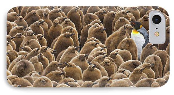 King Penguin In Creche  IPhone Case by Yva Momatiuk John Eastcott