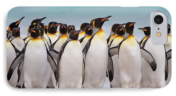 King Penguins IPhone Case by David Beebe
