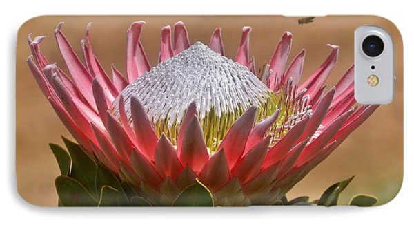 King Protea IPhone Case by Werner Lehmann