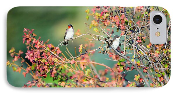 Kingbird Pair IPhone Case by Greg Norrell