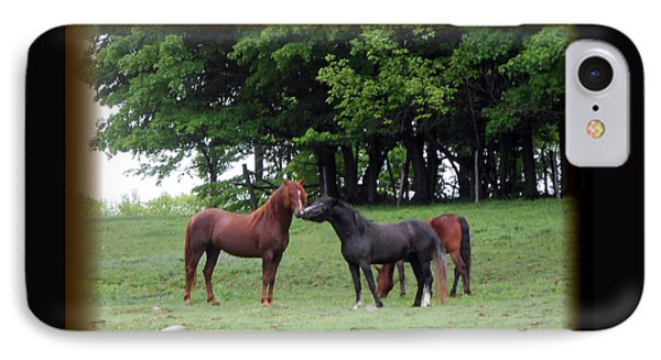 Kissing Cousins- The Paso Fino Stallions Phone Case by Patricia Keller