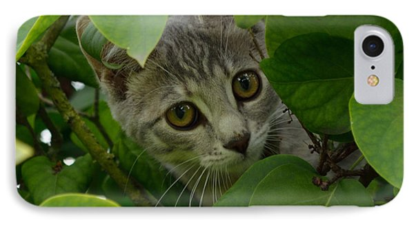 Kitten In The Bushes IPhone Case