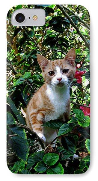 Kitten IPhone Case by Pamela Walton