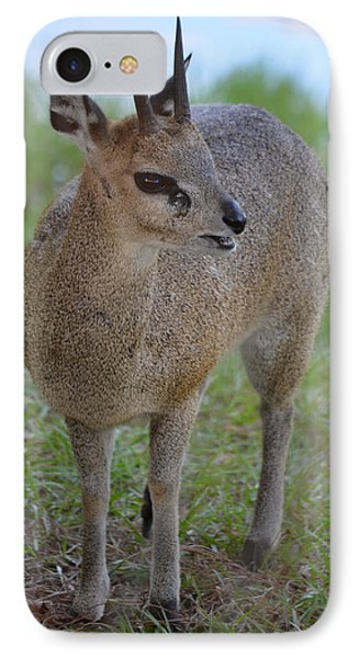 Klipspringer Phone Case by Richard Bryce and Family