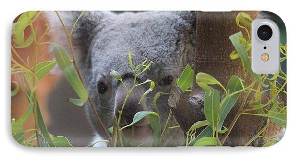 Koala Bear  IPhone Case by Dan Sproul