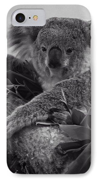 Koala IPhone Case by Chris Flees