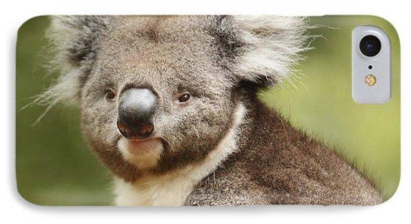 Koala IPhone Case by Craig Dingle