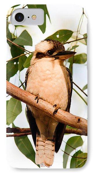 Kookaburra 2 IPhone Case by Carole Hinding
