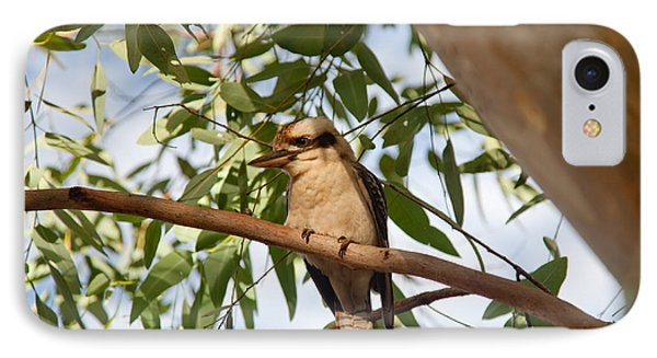 Kookaburra 3 IPhone Case by Carole Hinding