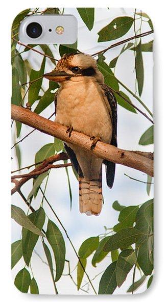 Kookaburra IPhone Case by Carole Hinding