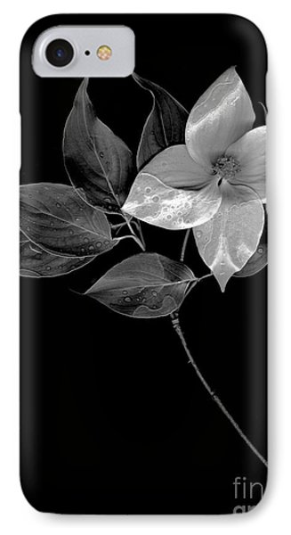 Kousa Dogwood In Black And White IPhone Case by Sharon Talson