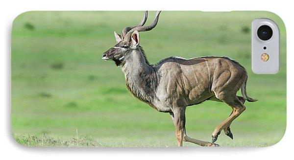 Kudu Bull Running Across Open Veld IPhone Case by Peter Chadwick