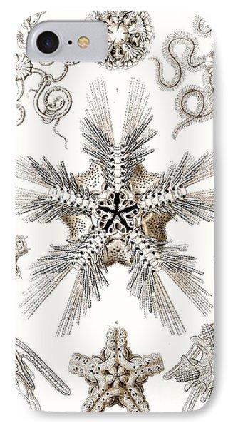 Kunstformen Der Natur Phone Case by Ernst Haeckel