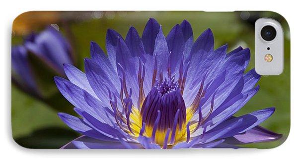 La Fleur De Lotus - Star Of Zanzibar Tropical Water Lily Phone Case by Sharon Mau