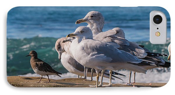 La Jolla Birds IPhone Case