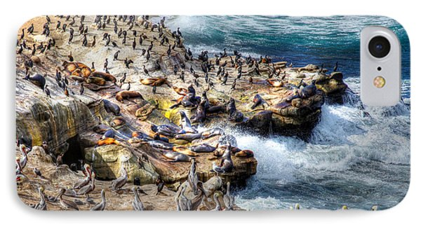 La Jolla Cove Wildlife IPhone Case