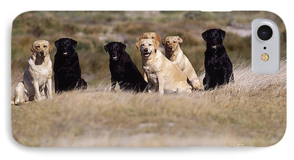 Labrador Dogs Waiting For Orders IPhone Case