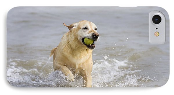 Labrador-mix Retrieving Ball IPhone Case