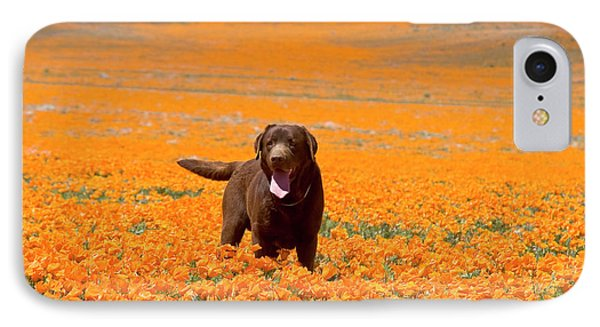 Labrador Retriever Standing Alone IPhone Case