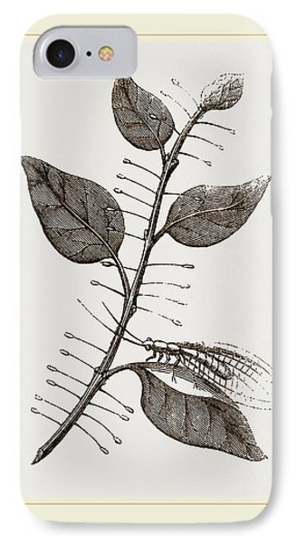 Lace-winged Fly And Eggs On Lilac IPhone Case by Litz Collection
