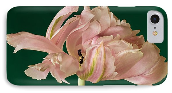 IPhone Case featuring the photograph Lacey Tulip by Patricia Schaefer