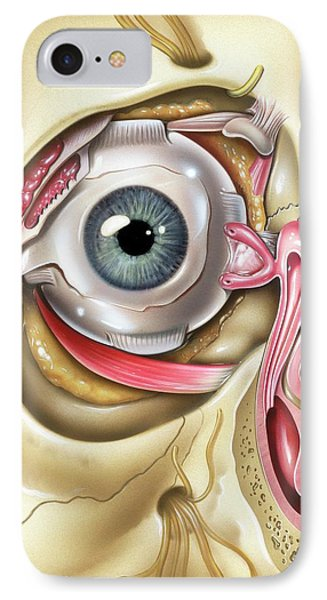 Lacrimal Apparatus Of The Eye IPhone Case by John Bavosi
