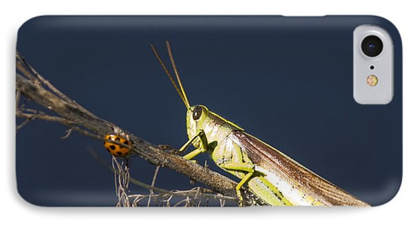IPhone Case featuring the photograph Lady Bug And Wise One by Paula Porterfield-Izzo