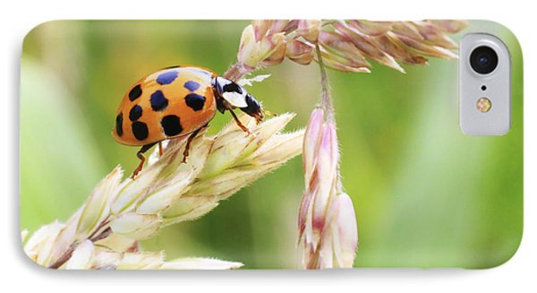 Lady Bug On A Warm Summer Day IPhone Case