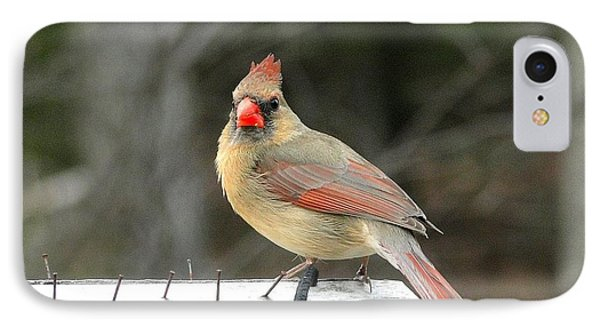 Lady Cardinal IPhone Case by Cindy Croal