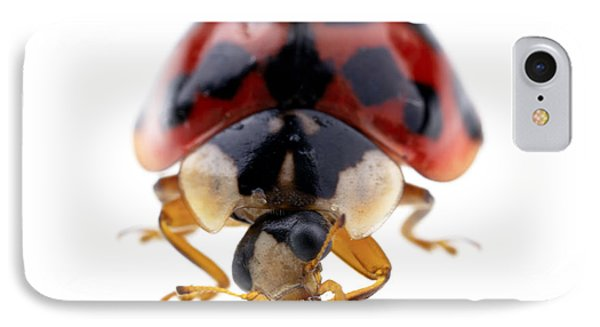 Ladybird Macro IPhone Case