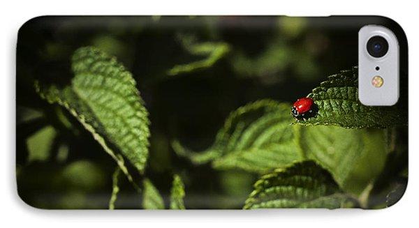 Ladybug IPhone Case by Bradley R Youngberg