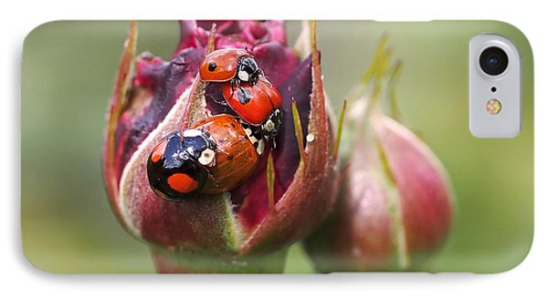 Ladybug Foursome IPhone Case by Rona Black
