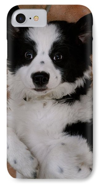 Laid Back Border Collie IPhone Case