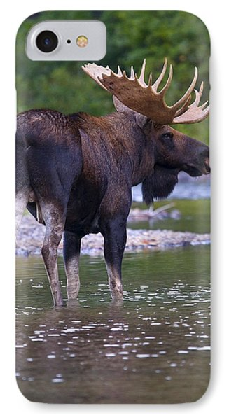 Lake Bull IPhone Case by Aaron Whittemore