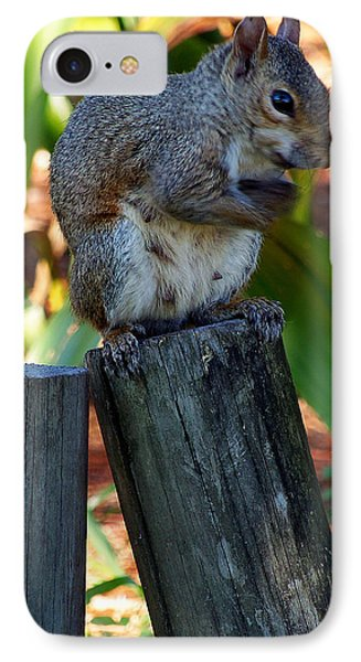 IPhone Case featuring the photograph Lake Howard Squirrel 019 by Chris Mercer