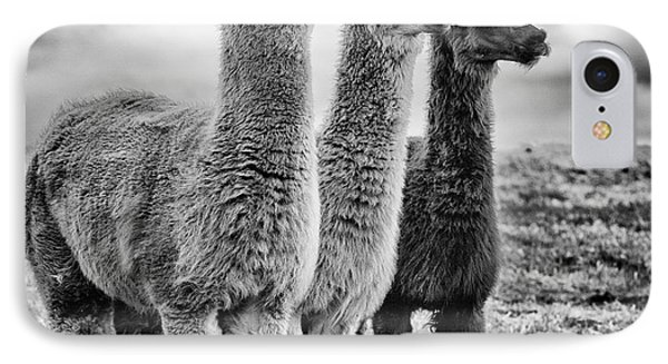Lama Lineup IPhone Case by John Farnan