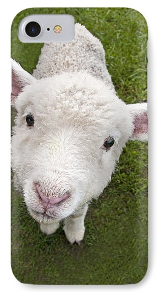 IPhone Case featuring the photograph Lamb by Dennis Cox WorldViews