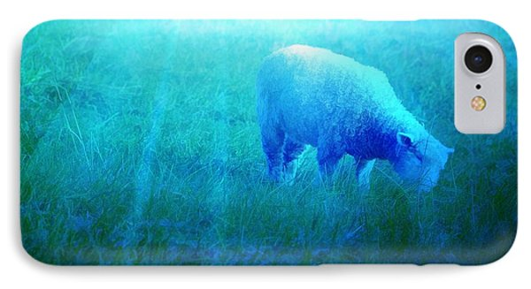 Lamb In Morning Light IPhone Case by Jan Amiss Photography