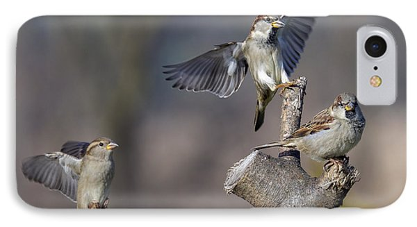 Landing Perch IPhone Case by David Lester