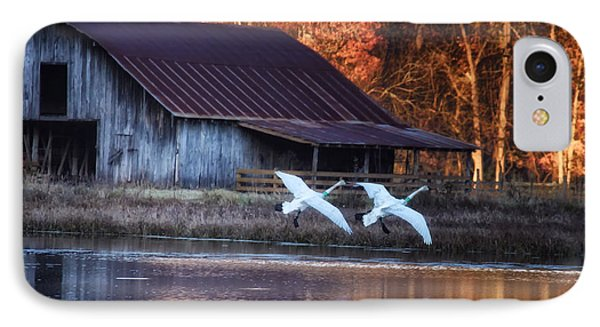 Landing Trumpeter Swans Boxley Mill Pond IPhone Case