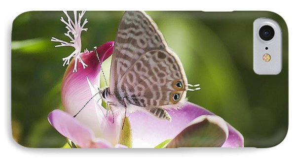 Lang's Short-tailed Blue II IPhone Case by Meir Ezrachi