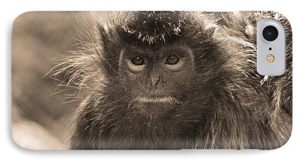 Langur Portrait IPhone Case