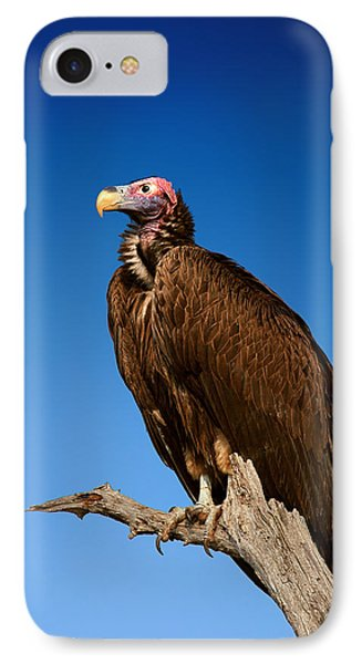 Lappetfaced Vulture Against Blue Sky IPhone Case by Johan Swanepoel